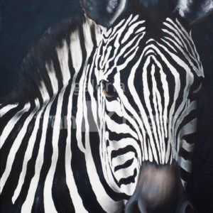 Frank Krüger - Zebra